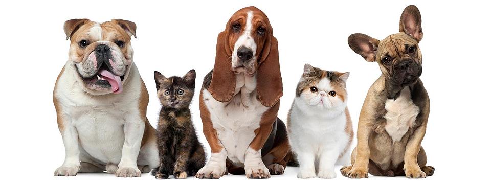 Tu veterinario de confianza…