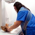 Servicio de radiografía en nuestro centro veterinario de Bormujos o Umbrete